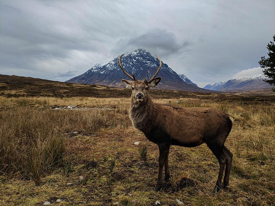 dzika przyroda w szkocji