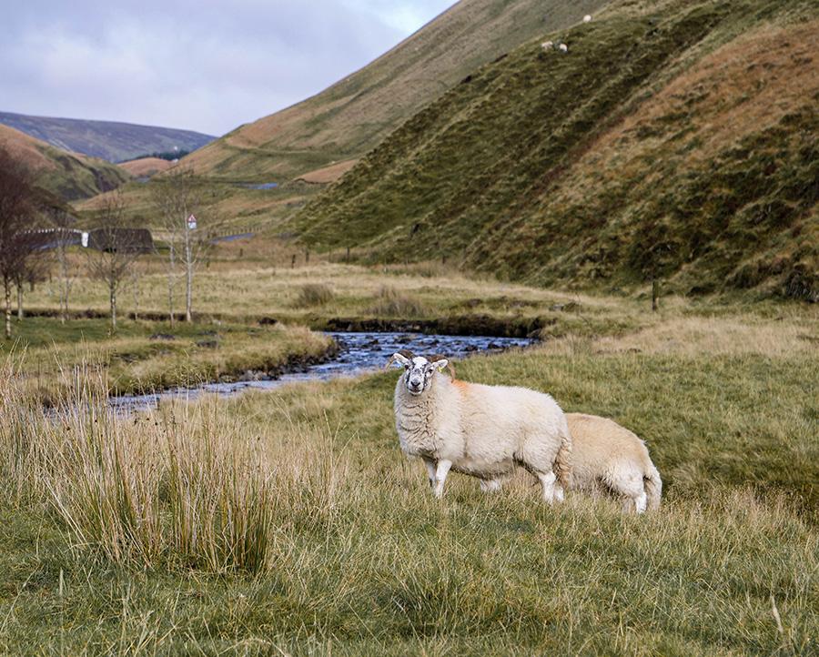 wzgórza moffat południowa szkocja