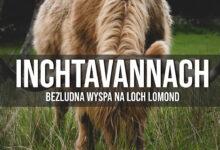 Inchtavannach – bezludna wyspa na Loch Lomond