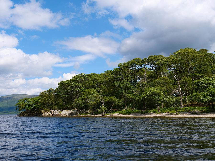 Inchconnachan - prywatna wyspa, kangury w Szkocji