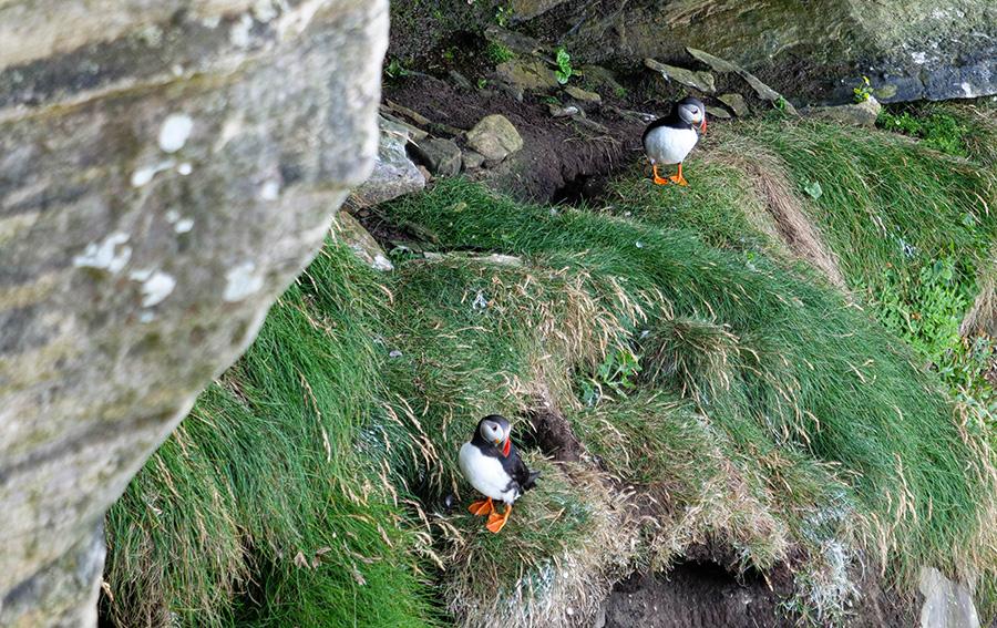 Maskonury w Szkocji gdzie można je spotkać występowanie