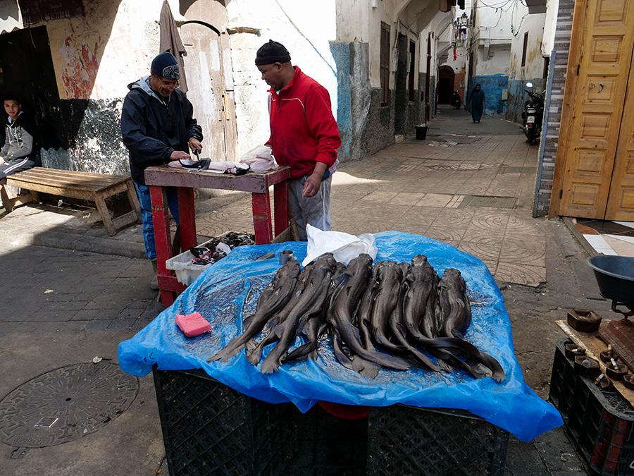 casablanca targ rybny zwiedzanie