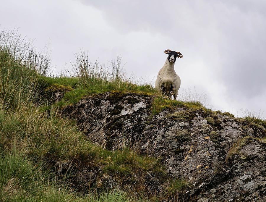 trekking góry w Szkocji Beinn Bhuidhe