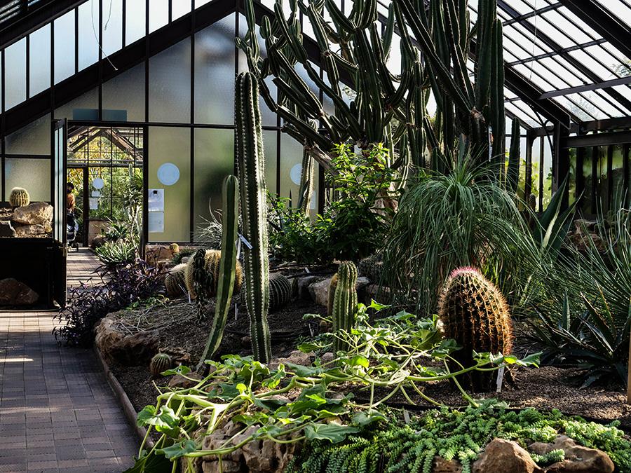 Botanic Garden - Ogród Botaniczny atrakcje w glasgow