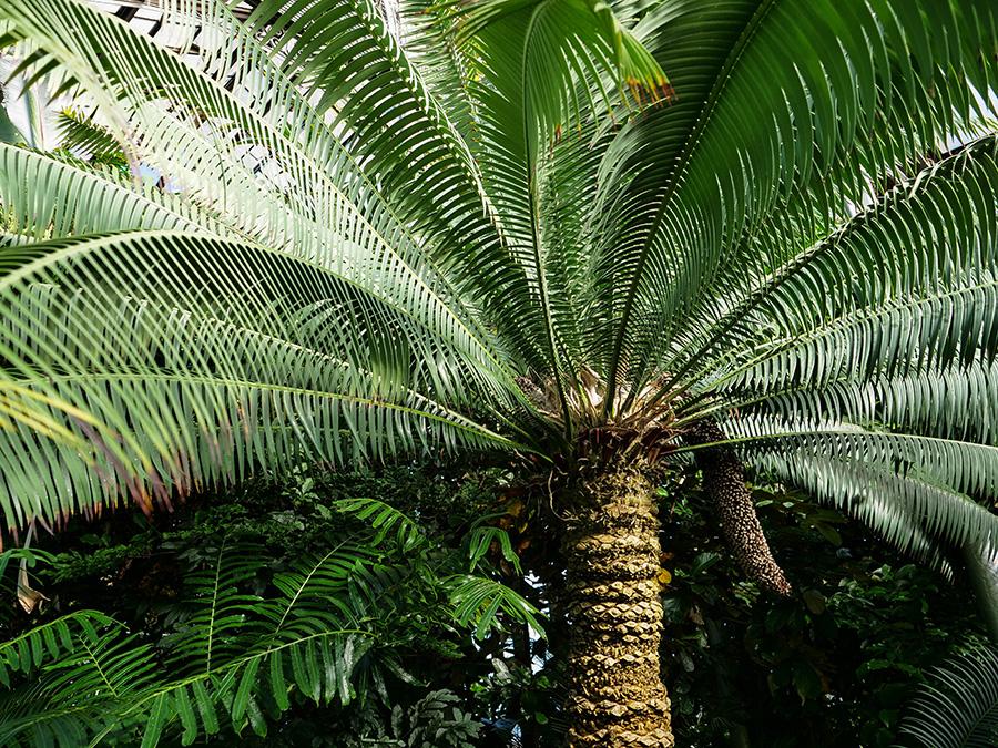 Ogród Botaniczny w Glasgow zwiedzanie