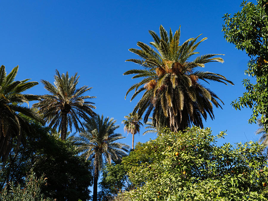 ogrody w marrakeszu atrakcje