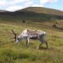 Park Narodowy Cairngorm w Szkocji