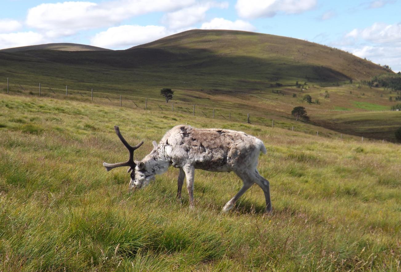 Park Narodowy Cairngorm Szkocja