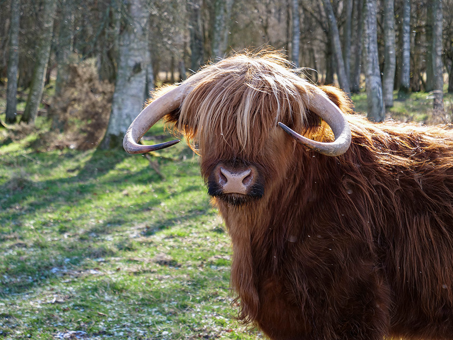 co warto zobaczyć w Szkocji Park Narodowy Cairngorms