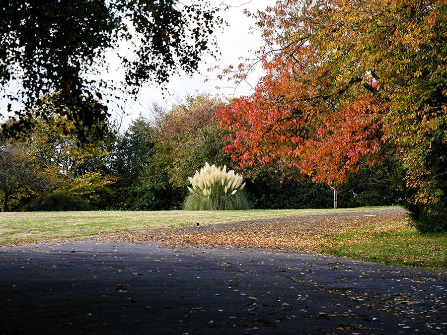 ruchill park punkt widokowy i park w glasgow