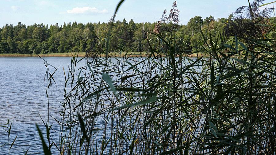 Jezioro Karpie co warto zobaczyć w Wielkopolsce
