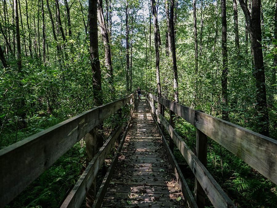 Ścieżka nad Bukówką atrakcje w północnej Wielkopolsce
